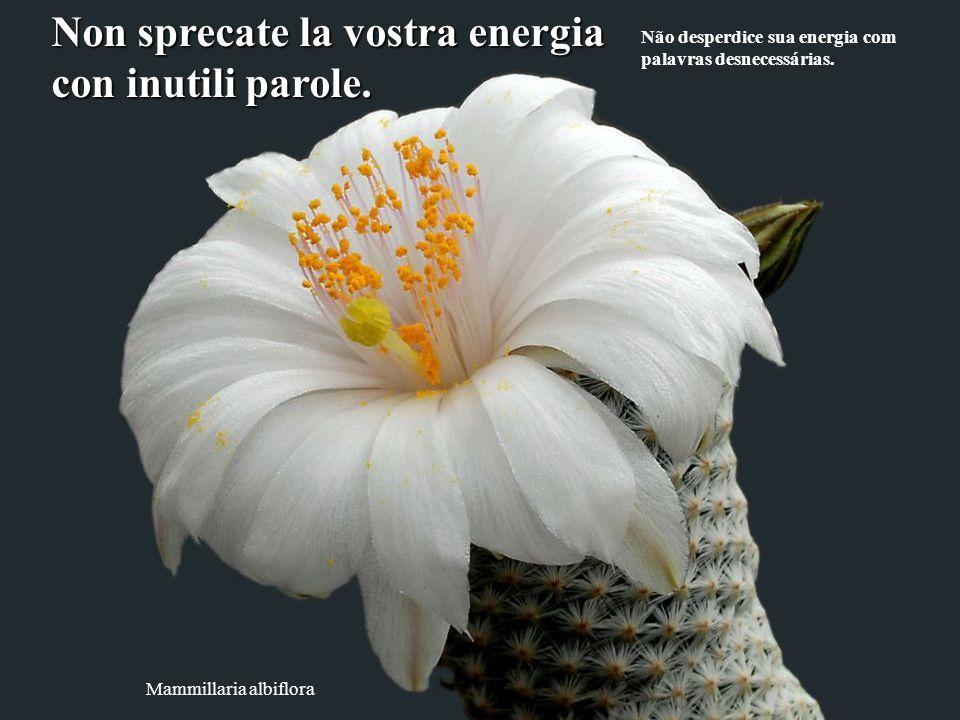 Escobaria wissmannii Cercate ogni giorno di far ridere almeno tre persone.