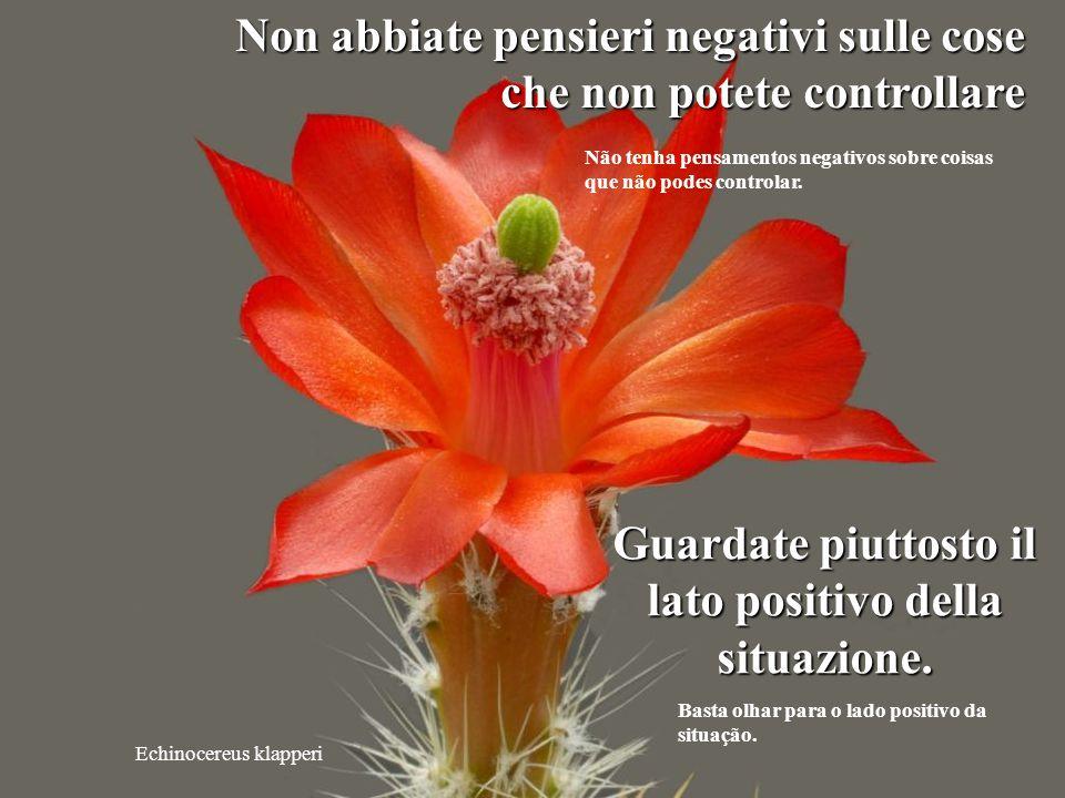 Mammillaria albiflora Non sprecate la vostra energia con inutili parole. Não desperdice sua energia com palavras desnecessárias.