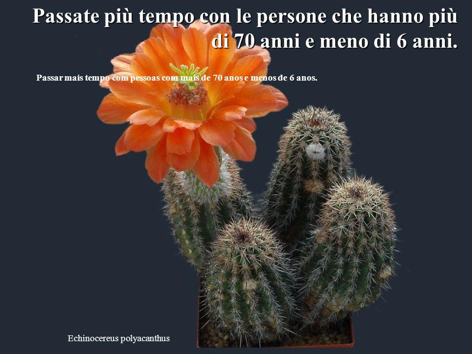 Echinocereus klapperi Non abbiate pensieri negativi sulle cose che non potete controllare che non potete controllare Guardate piuttosto il lato positi