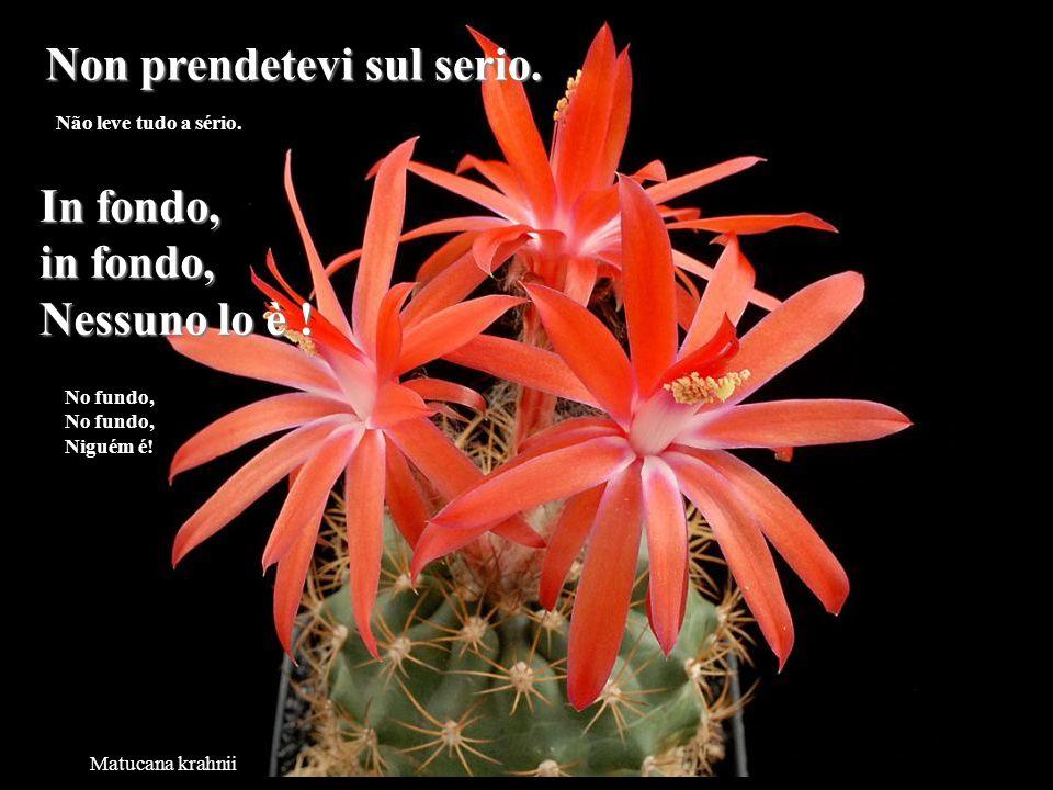 Neowerdermannia vorwerkii La vita è troppo corta per perdere del tempo a odiare la gente. A vida é demasiadamente curta para perdermos tempo odiando a
