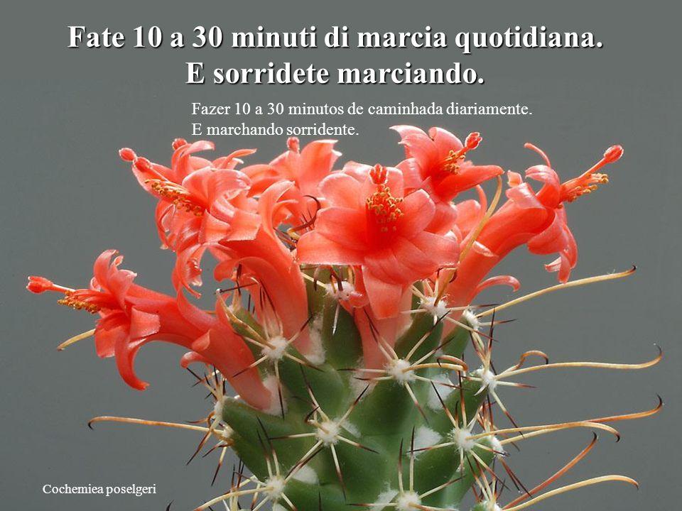 Cochemiea poselgeri Fate 10 a 30 minuti di marcia quotidiana.