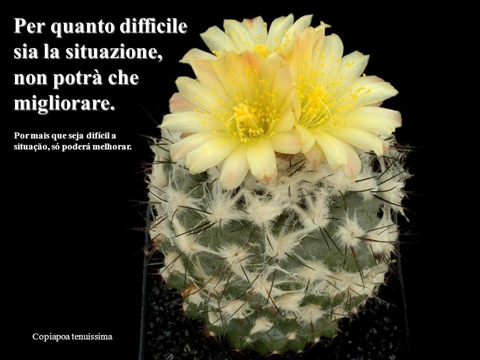 Mammillaria slevinii Poco importa quello che la gente pensa di voi.