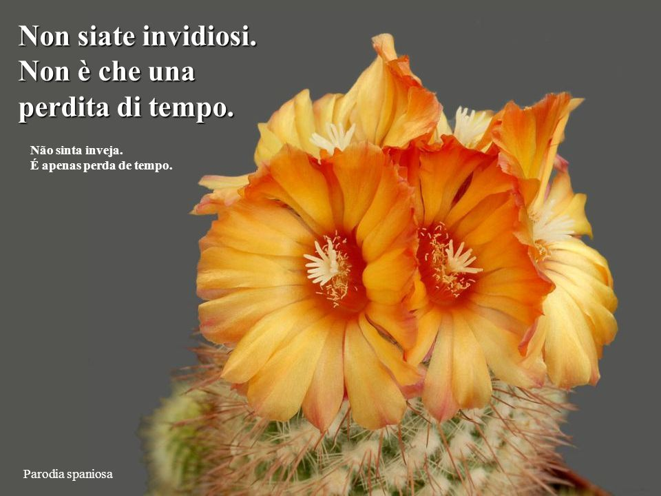 Ortegocactus macdougallii Sbarazzatevi di tutto quello che è inutile per puntare solo al meglio.