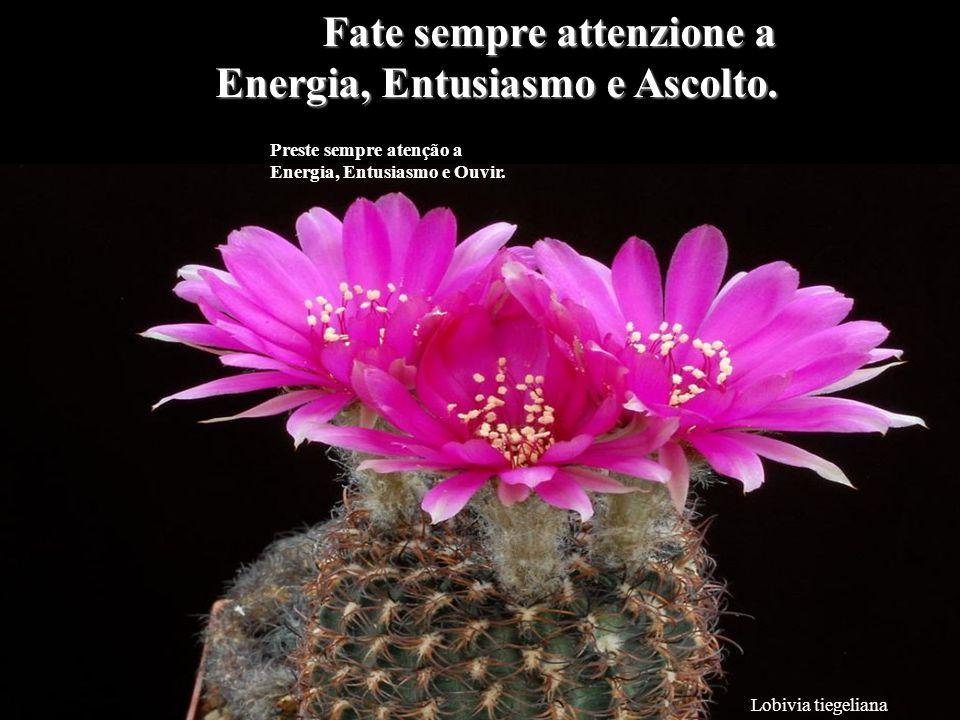Mammillaria albiflora Non sprecate la vostra energia con inutili parole.