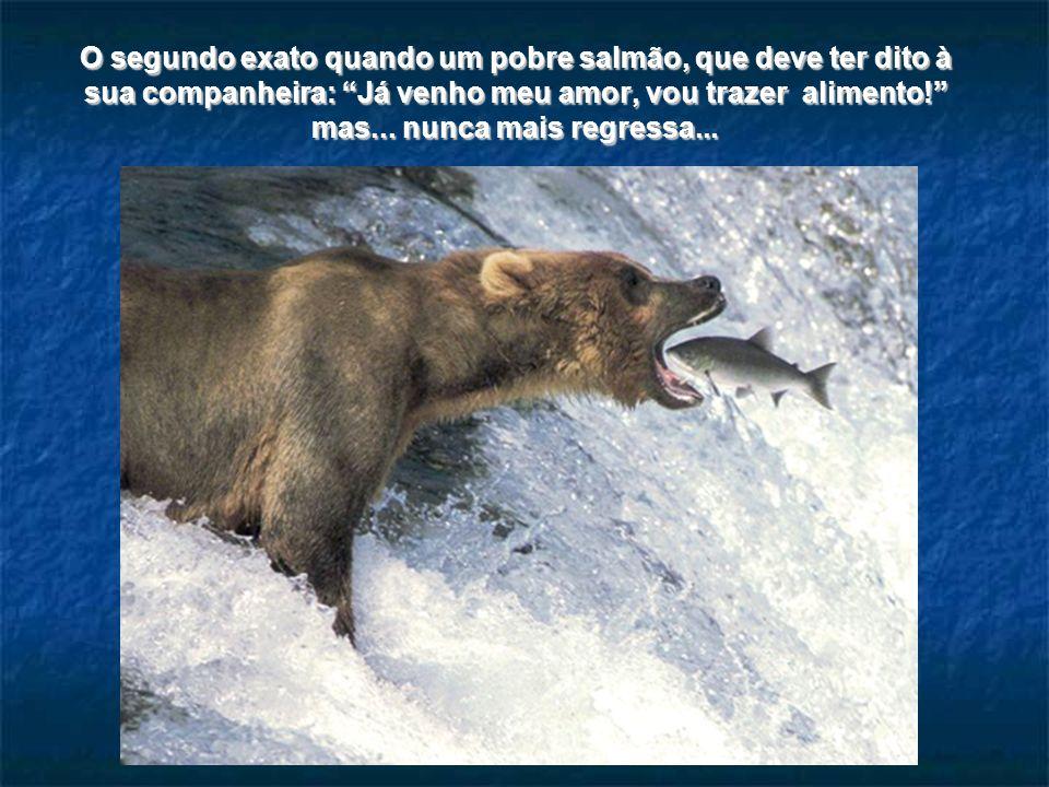 O segundo exato quando uma baleia, mamífero afinal, decide subir à superfície para tomar ar, e nesse momento um golfinho passa por cima dela...