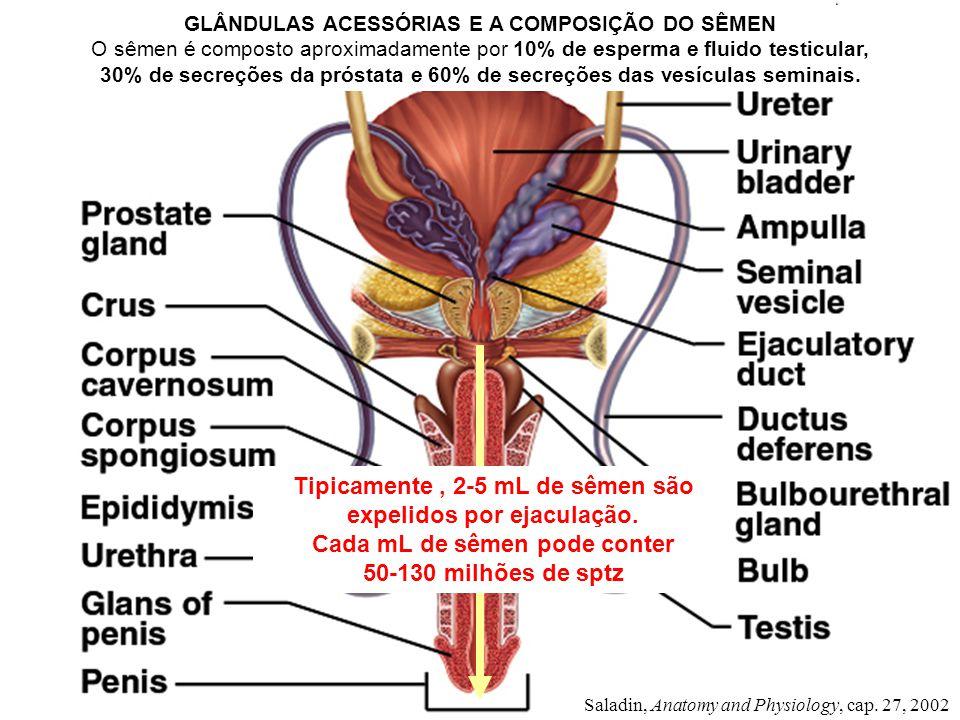 Saladin, Anatomy and Physiology, cap. 27, 2002 GLÂNDULAS ACESSÓRIAS E A COMPOSIÇÃO DO SÊMEN O sêmen é composto aproximadamente por 10% de esperma e fl