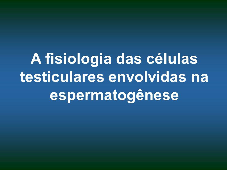 A fisiologia das células testiculares envolvidas na espermatogênese