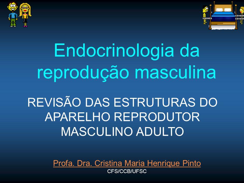 Endocrinologia da reprodução masculina Profa. Dra. Cristina Maria Henrique Pinto CFS/CCB/UFSC REVISÃO DAS ESTRUTURAS DO APARELHO REPRODUTOR MASCULINO