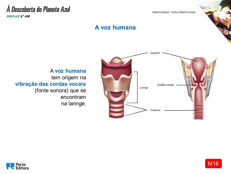 A voz humana tem origem na vibração das cordas vocais (fonte sonora) que se encontram na laringe. A voz humana M16