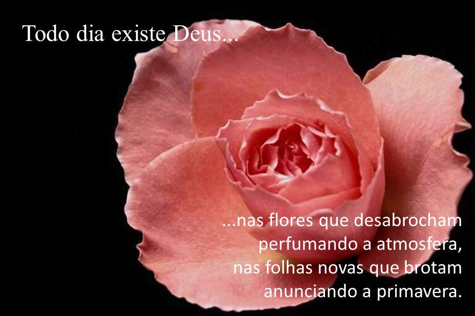 ...nas flores que desabrocham perfumando a atmosfera, nas folhas novas que brotam anunciando a primavera.
