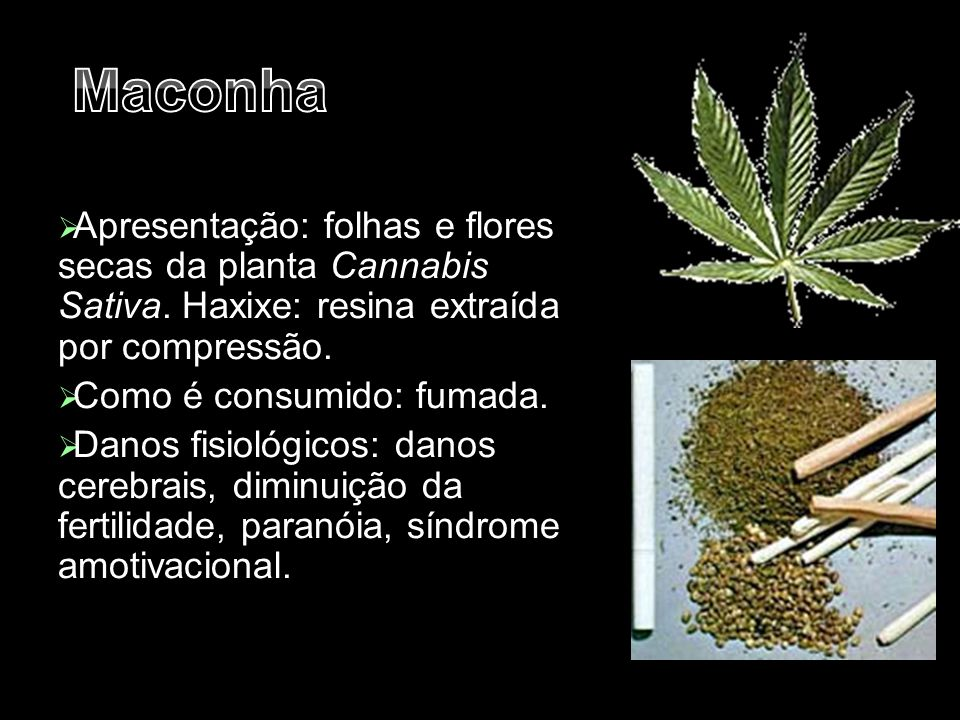  Apresentação: folhas e flores secas da planta Cannabis Sativa. Haxixe: resina extraída por compressão.  Como é consumido: fumada.  Danos fisiológi