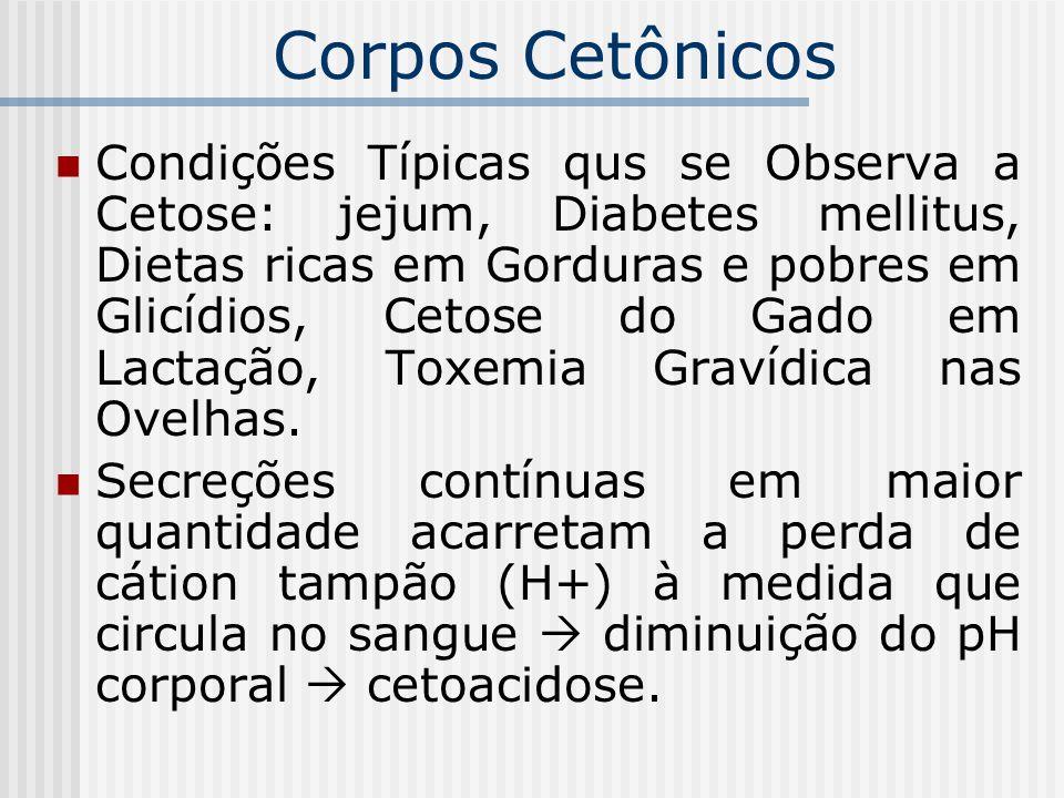 Condições Típicas qus se Observa a Cetose: jejum, Diabetes mellitus, Dietas ricas em Gorduras e pobres em Glicídios, Cetose do Gado em Lactação, Toxem