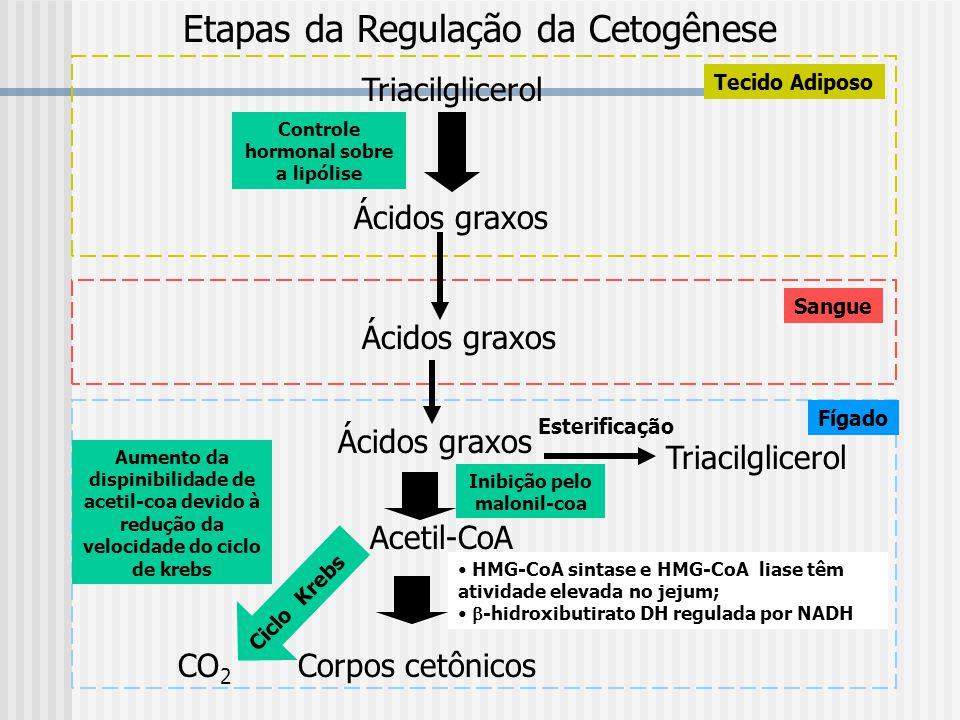 Etapas da Regulação da Cetogênese Triacilglicerol Ácidos graxos Acetil-CoA Corpos cetônicos Triacilglicerol CO 2 Esterificação Aumento da dispinibilid