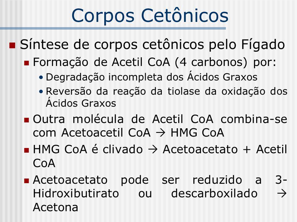 Síntese de corpos cetônicos pelo Fígado Formação de Acetil CoA (4 carbonos) por: Degradação incompleta dos Ácidos Graxos Reversão da reação da tiolase