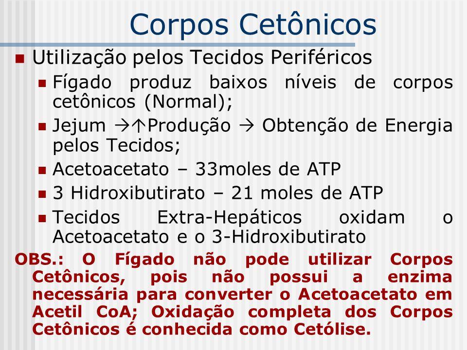 Utilização pelos Tecidos Periféricos Fígado produz baixos níveis de corpos cetônicos (Normal); Jejum  Produção  Obtenção de Energia pelos Tecidos;