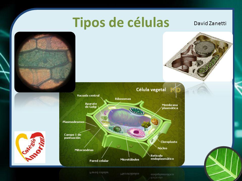 Célula Célula: A célula representa a menor porção de matéria viva.