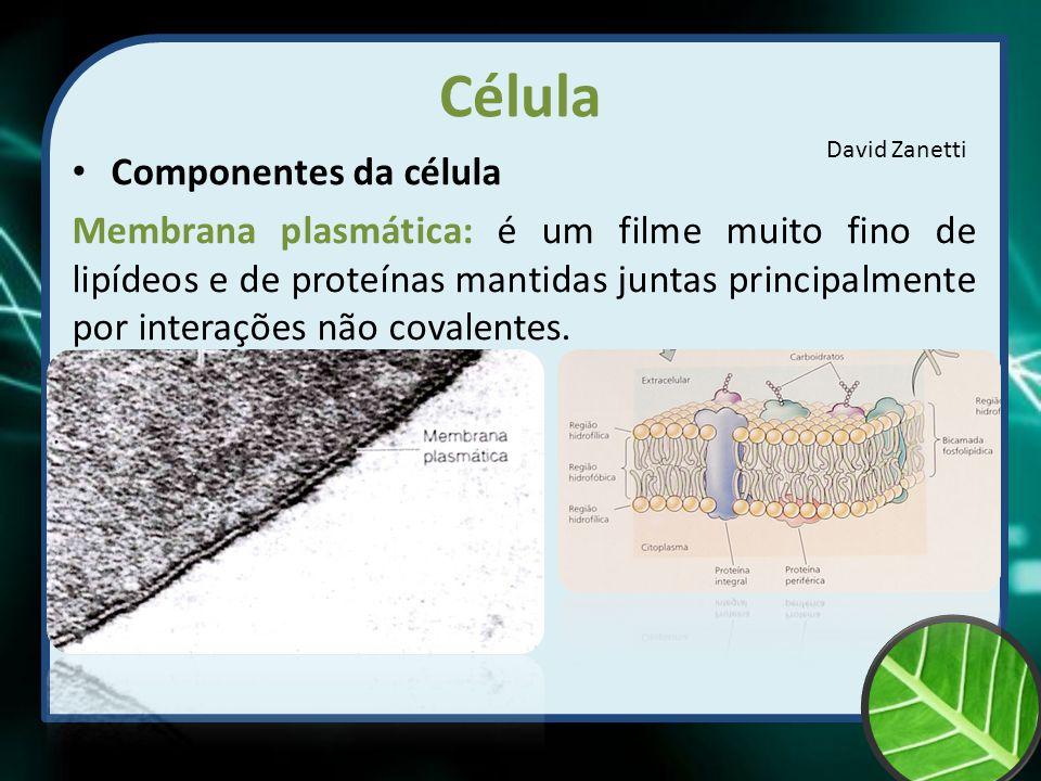 Célula Componentes da célula Membrana plasmática: é um filme muito fino de lipídeos e de proteínas mantidas juntas principalmente por interações não c