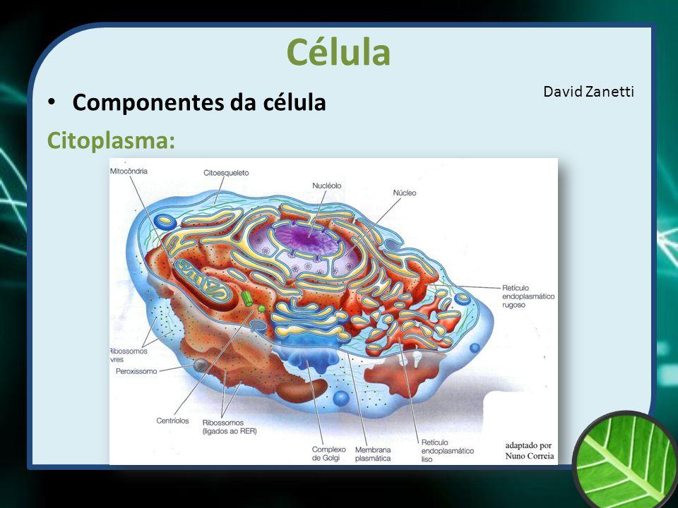Célula Componentes da célula Citoplasma: David Zanetti