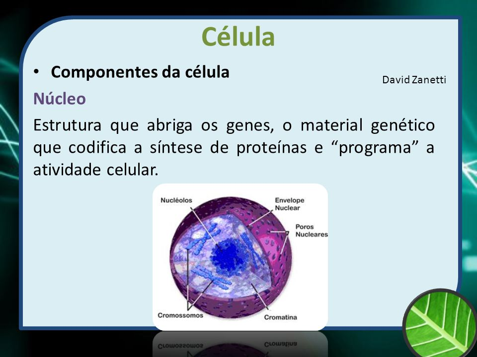 "Célula Componentes da célula Núcleo Estrutura que abriga os genes, o material genético que codifica a síntese de proteínas e ""programa"" a atividade ce"