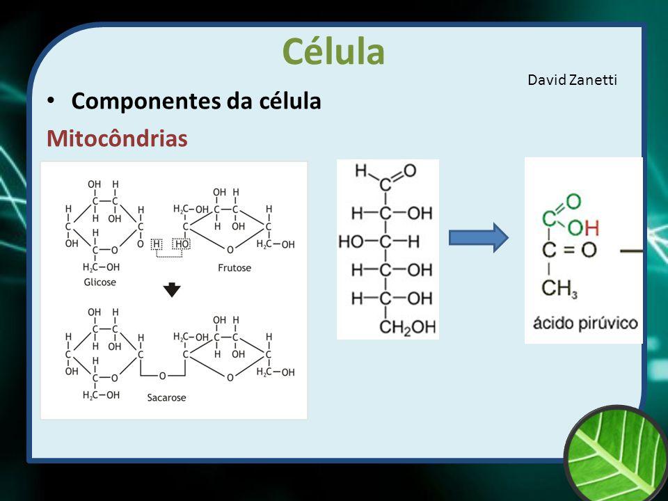 Célula Componentes da célula Mitocôndrias David Zanetti