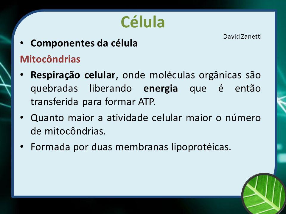 Célula Componentes da célula Mitocôndrias Respiração celular, onde moléculas orgânicas são quebradas liberando energia que é então transferida para fo