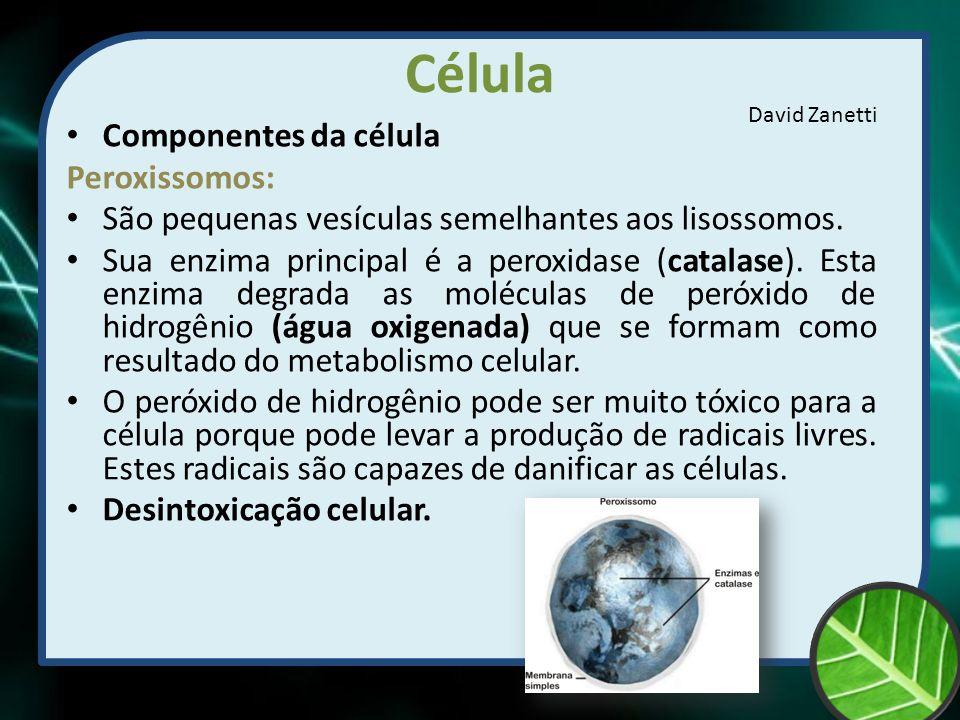 Célula Componentes da célula Peroxissomos: São pequenas vesículas semelhantes aos lisossomos. Sua enzima principal é a peroxidase (catalase). Esta enz