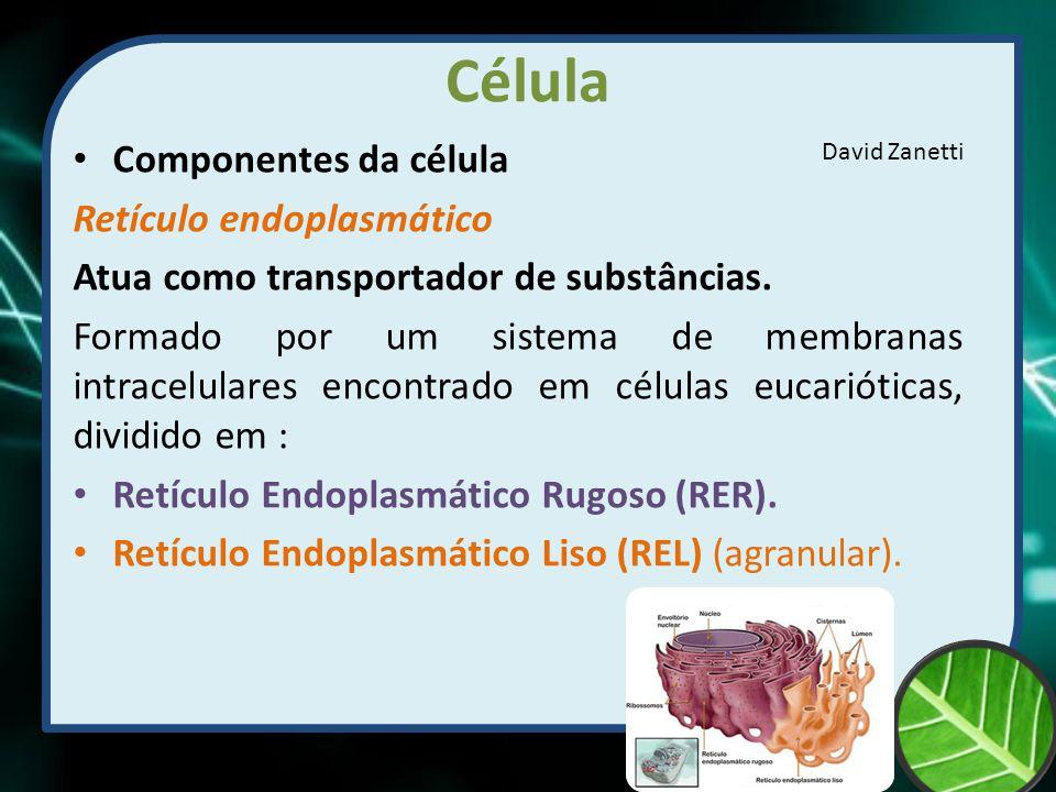 Célula Componentes da célula Retículo endoplasmático Atua como transportador de substâncias. Formado por um sistema de membranas intracelulares encont