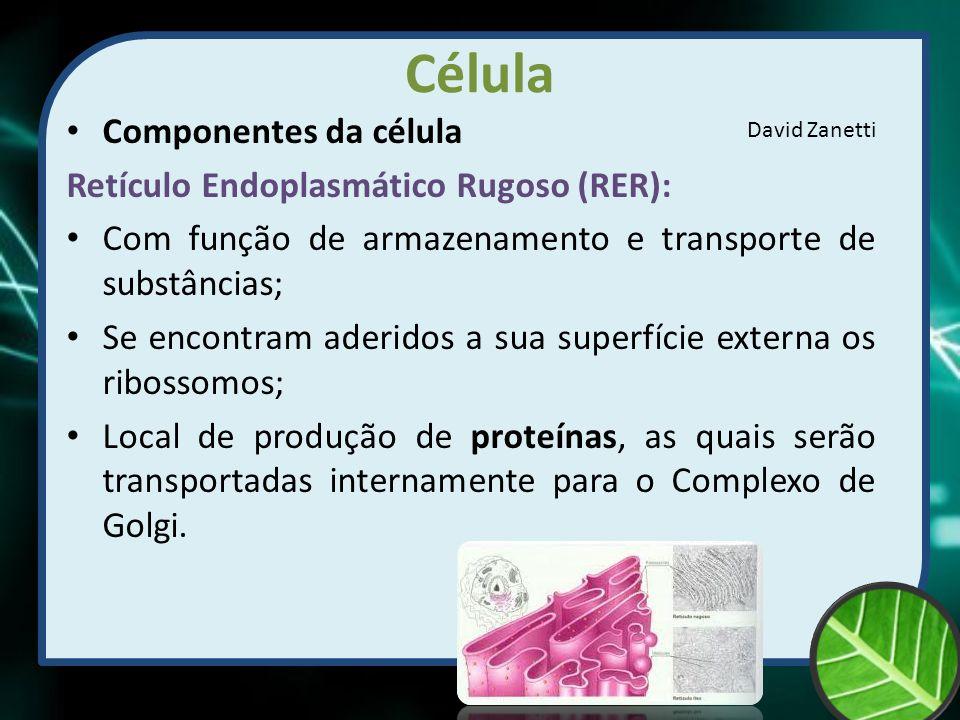 Célula Componentes da célula Retículo Endoplasmático Rugoso (RER): Com função de armazenamento e transporte de substâncias; Se encontram aderidos a su