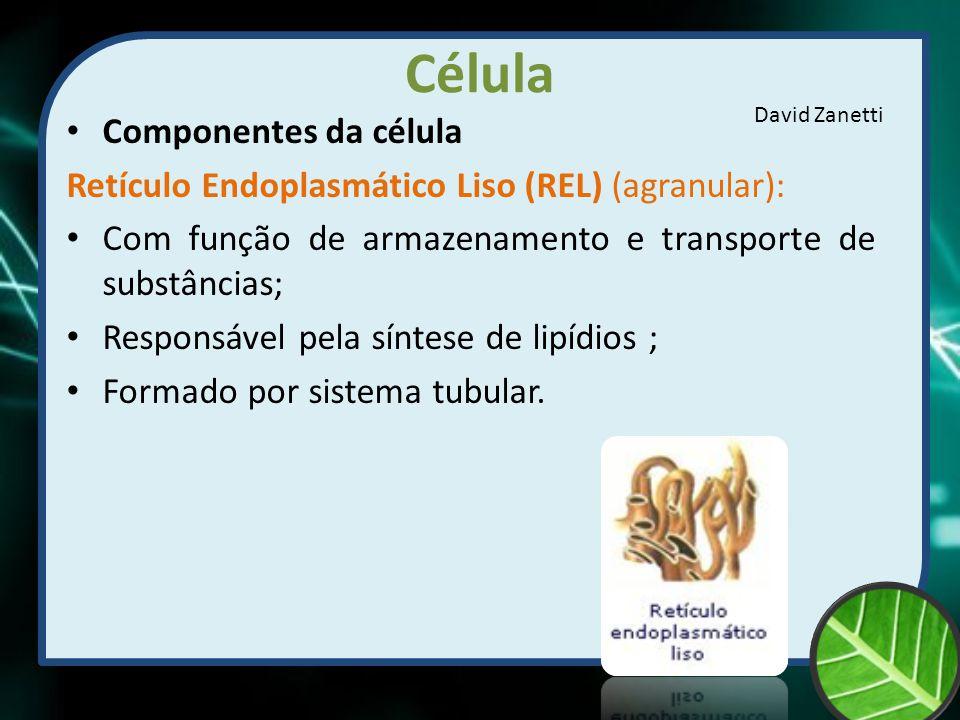 Célula Componentes da célula Retículo Endoplasmático Liso (REL) (agranular): Com função de armazenamento e transporte de substâncias; Responsável pela