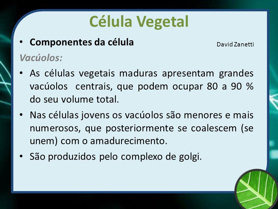 Célula Vegetal Componentes da célula Vacúolos: As células vegetais maduras apresentam grandes vacúolos centrais, que podem ocupar 80 a 90 % do seu vol
