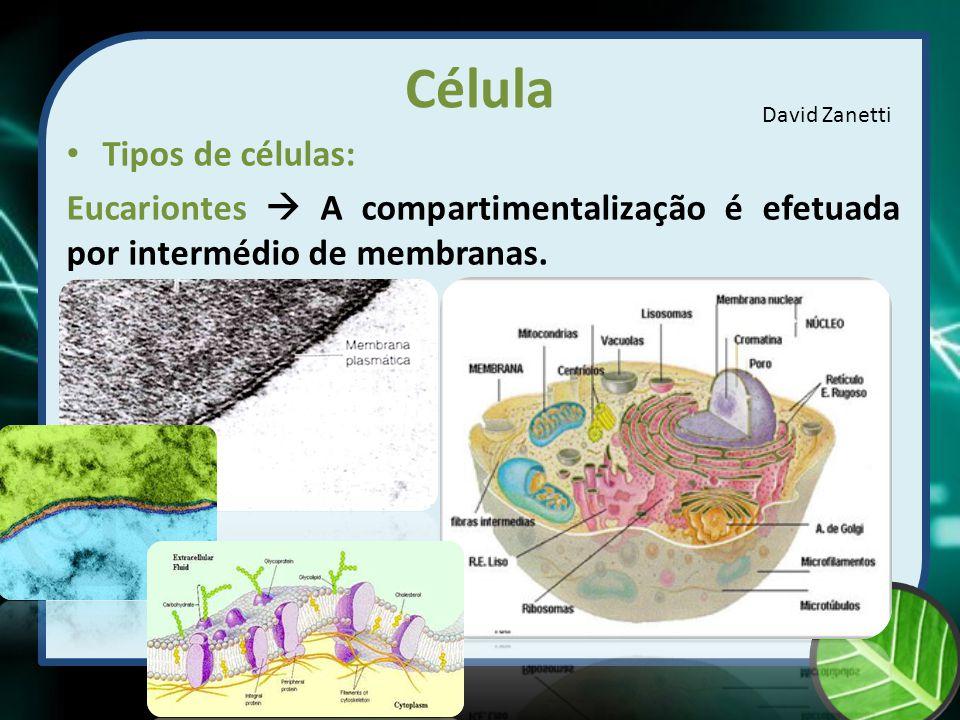 Célula Vegetal Componentes da célula Vacúolos: As células vegetais maduras apresentam grandes vacúolos centrais, que podem ocupar 80 a 90 % do seu volume total.