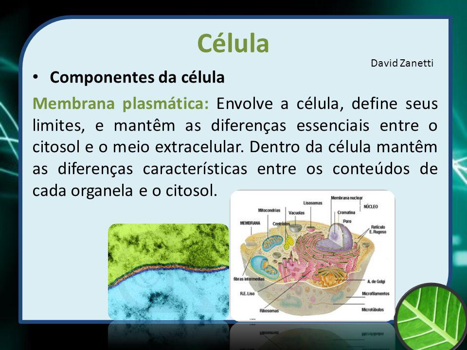 Célula Componentes da célula Membrana plasmática: Envolve a célula, define seus limites, e mantêm as diferenças essenciais entre o citosol e o meio ex