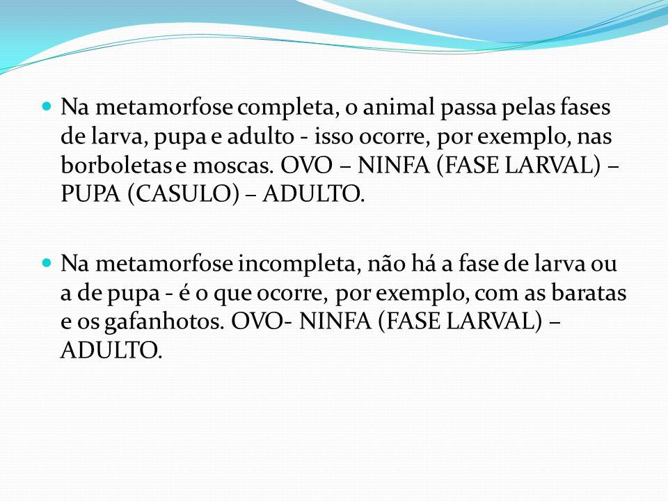 Na metamorfose completa, o animal passa pelas fases de larva, pupa e adulto - isso ocorre, por exemplo, nas borboletas e moscas. OVO – NINFA (FASE LAR