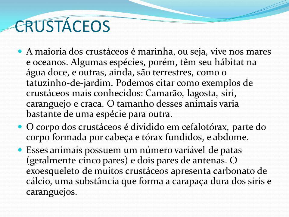 CRUSTÁCEOS A maioria dos crustáceos é marinha, ou seja, vive nos mares e oceanos. Algumas espécies, porém, têm seu hábitat na água doce, e outras, ain