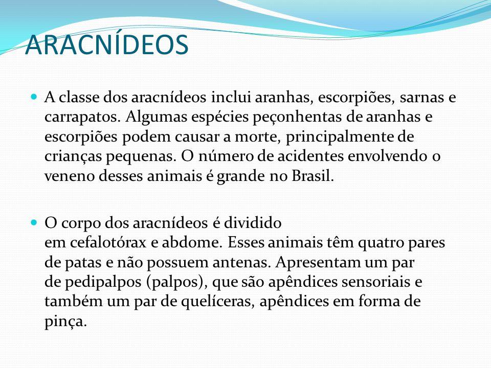 ARACNÍDEOS A classe dos aracnídeos inclui aranhas, escorpiões, sarnas e carrapatos. Algumas espécies peçonhentas de aranhas e escorpiões podem causar