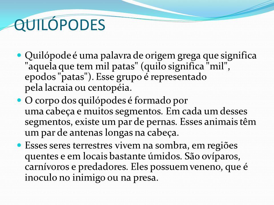 QUILÓPODES Quilópode é uma palavra de origem grega que significa
