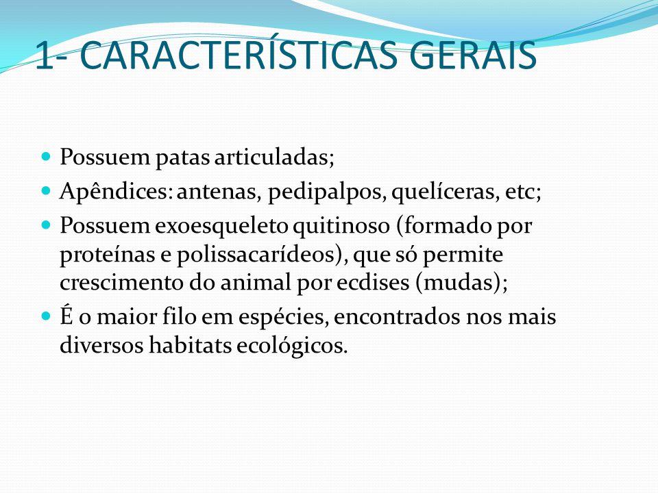 1- CARACTERÍSTICAS GERAIS Possuem patas articuladas; Apêndices: antenas, pedipalpos, quelíceras, etc; Possuem exoesqueleto quitinoso (formado por prot
