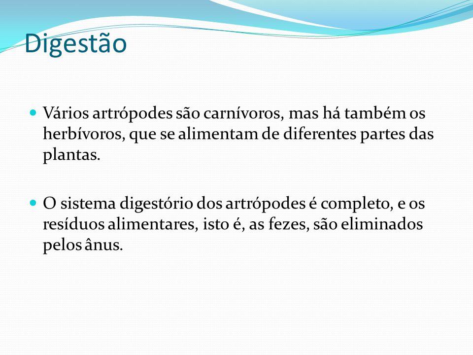 Digestão Vários artrópodes são carnívoros, mas há também os herbívoros, que se alimentam de diferentes partes das plantas. O sistema digestório dos ar