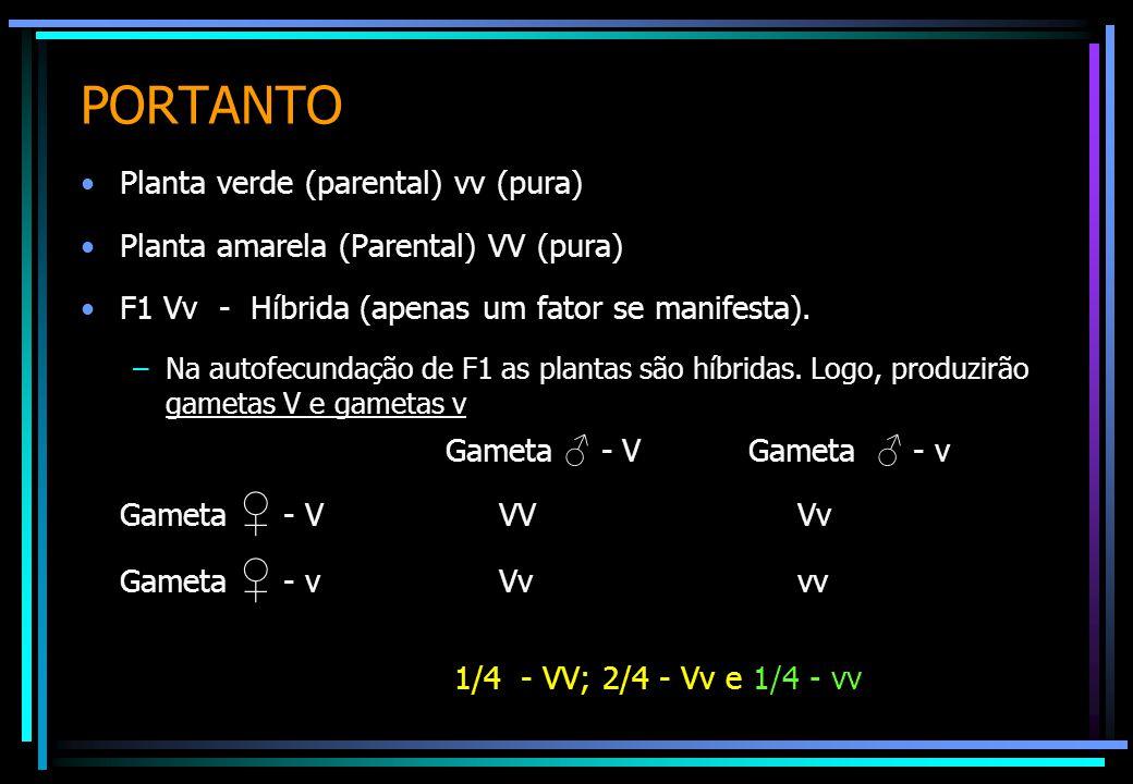 PORTANTO Planta verde (parental) vv (pura) Planta amarela (Parental) VV (pura) F1 Vv - Híbrida (apenas um fator se manifesta). –Na autofecundação de F