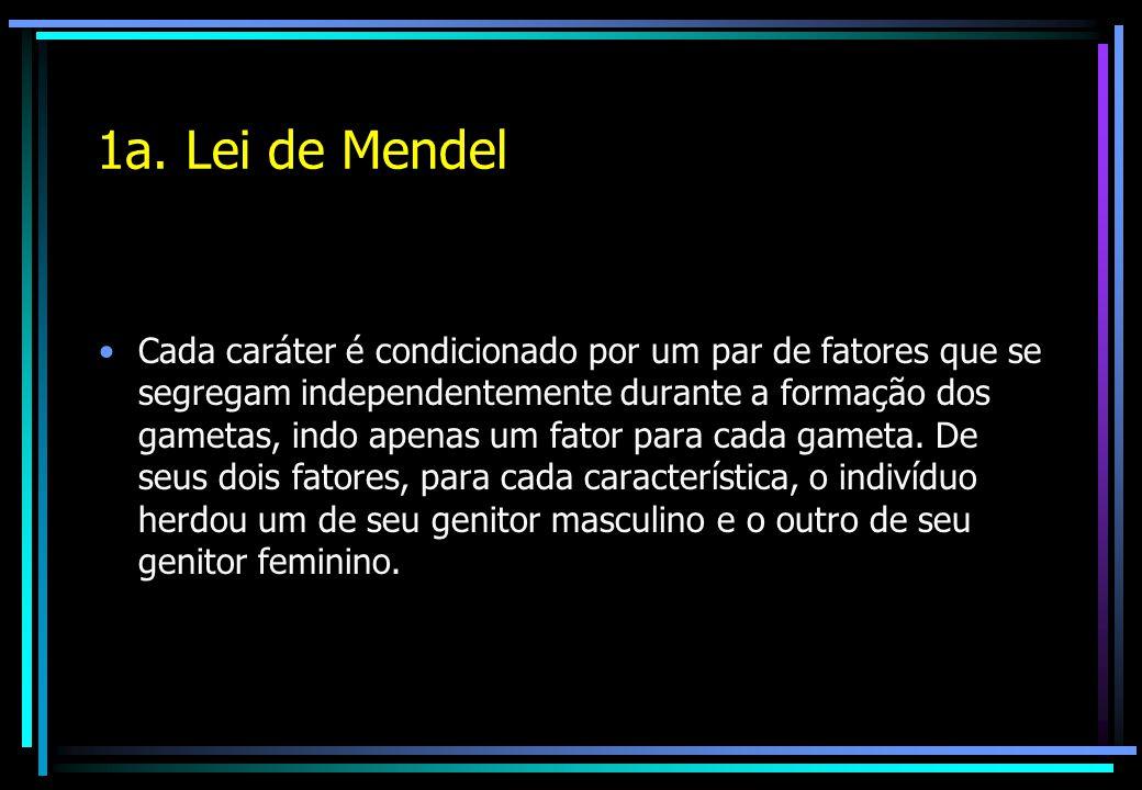1a. Lei de Mendel Cada caráter é condicionado por um par de fatores que se segregam independentemente durante a formação dos gametas, indo apenas um f