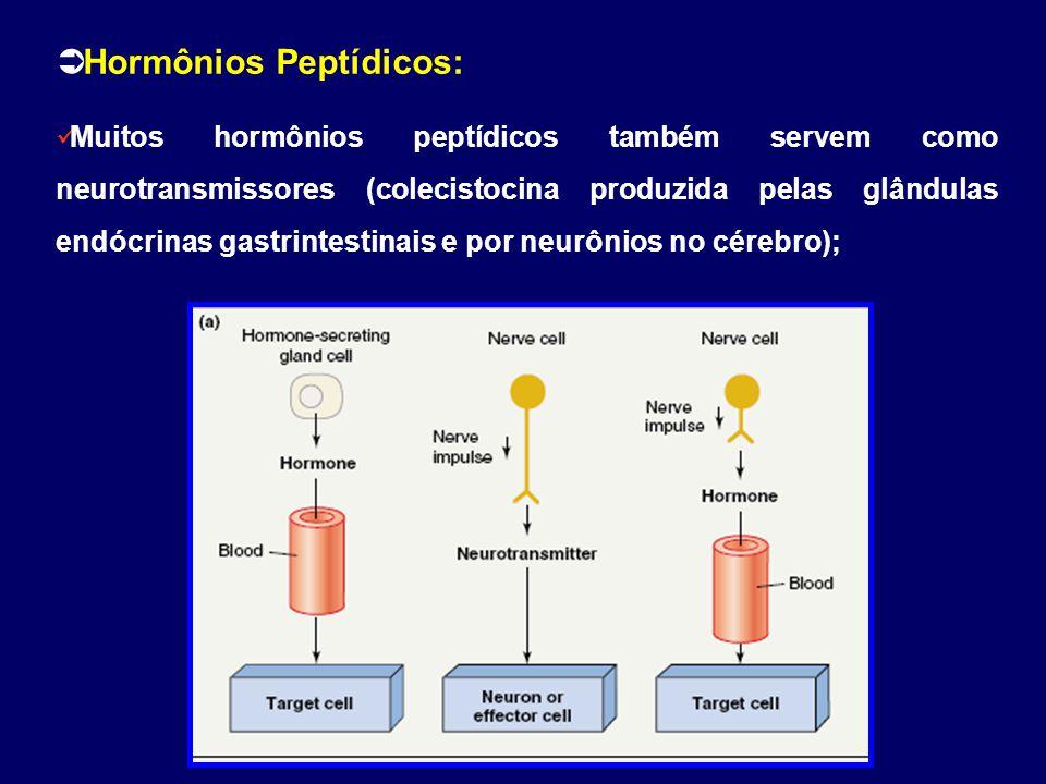  Hormônios Peptídicos: Muitos hormônios peptídicos também servem como neurotransmissores (colecistocina produzida pelas glândulas endócrinas gastrint