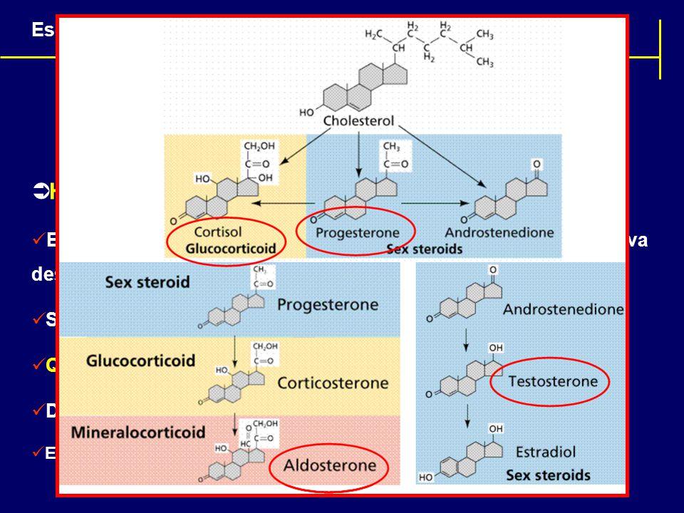 Hormônios Esteróides: Estrutura química similar ao colesterol e a maioria deles deriva dessa gordura; São lipossolúveis; QUAL A IMPLICAÇÃO DESSA INF