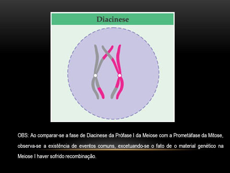 OBS: Ao comparar-se a fase de Diacinese da Prófase I da Meiose com a Prometáfase da Mitose, observa-se a existência de eventos comuns, excetuando-se o