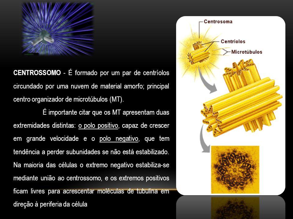 CENTROSSOMO - É formado por um par de centríolos circundado por uma nuvem de material amorfo; principal centro organizador de microtúbulos (MT). É imp