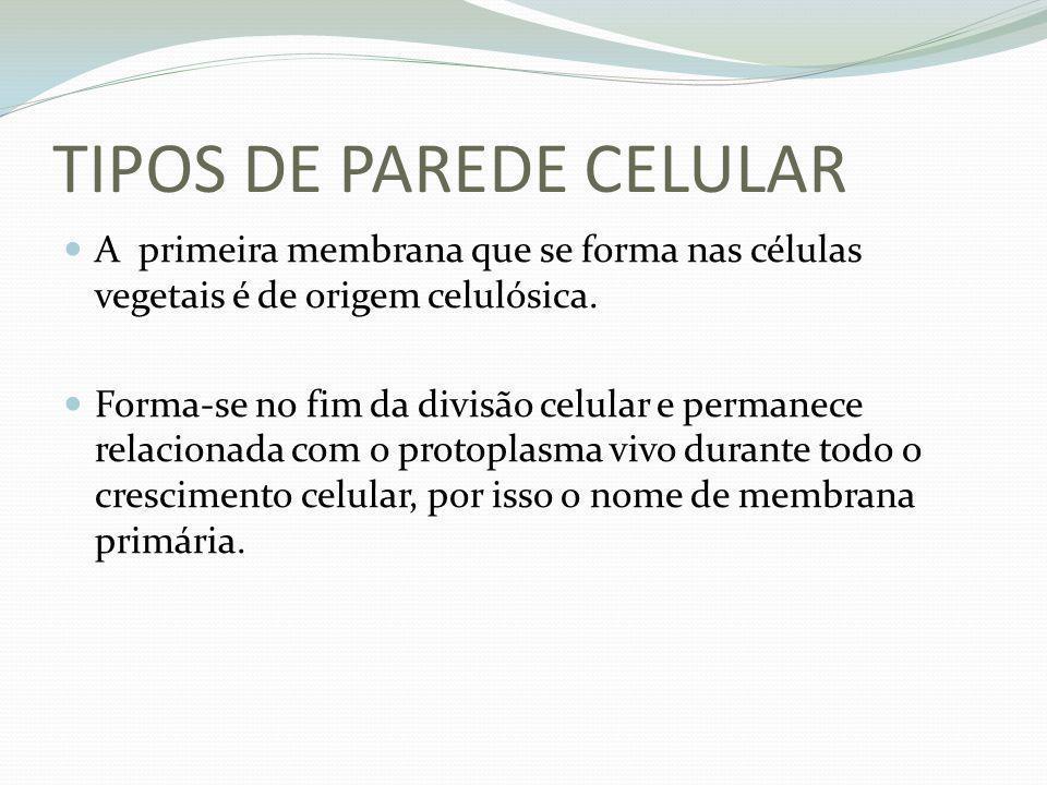 TIPOS DE PAREDE CELULAR A primeira membrana que se forma nas células vegetais é de origem celulósica. Forma-se no fim da divisão celular e permanece r