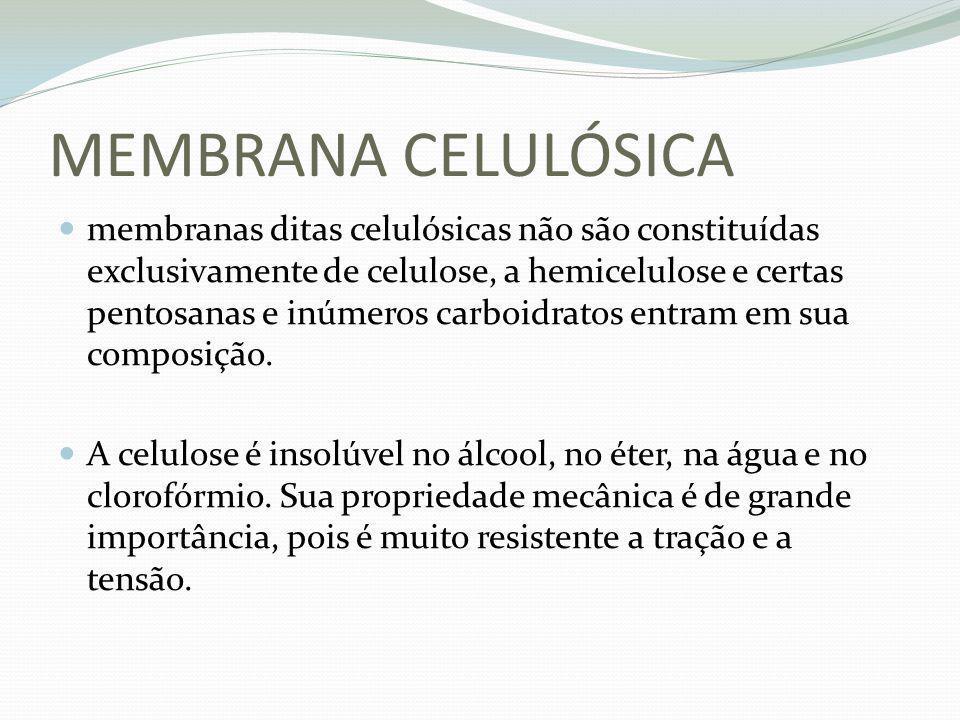 MEMBRANA CELULÓSICA membranas ditas celulósicas não são constituídas exclusivamente de celulose, a hemicelulose e certas pentosanas e inúmeros carboid