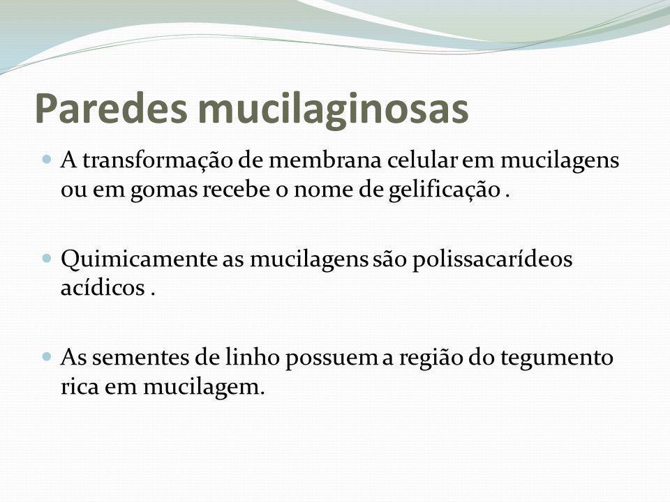 Paredes mucilaginosas A transformação de membrana celular em mucilagens ou em gomas recebe o nome de gelificação. Quimicamente as mucilagens são polis