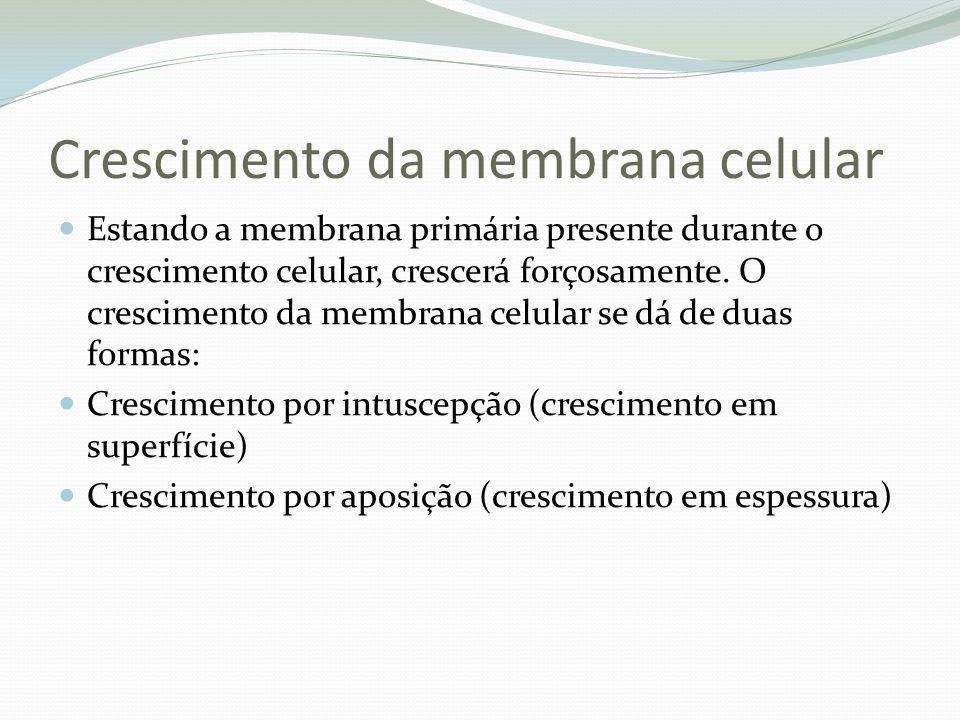 Crescimento da membrana celular Estando a membrana primária presente durante o crescimento celular, crescerá forçosamente. O crescimento da membrana c