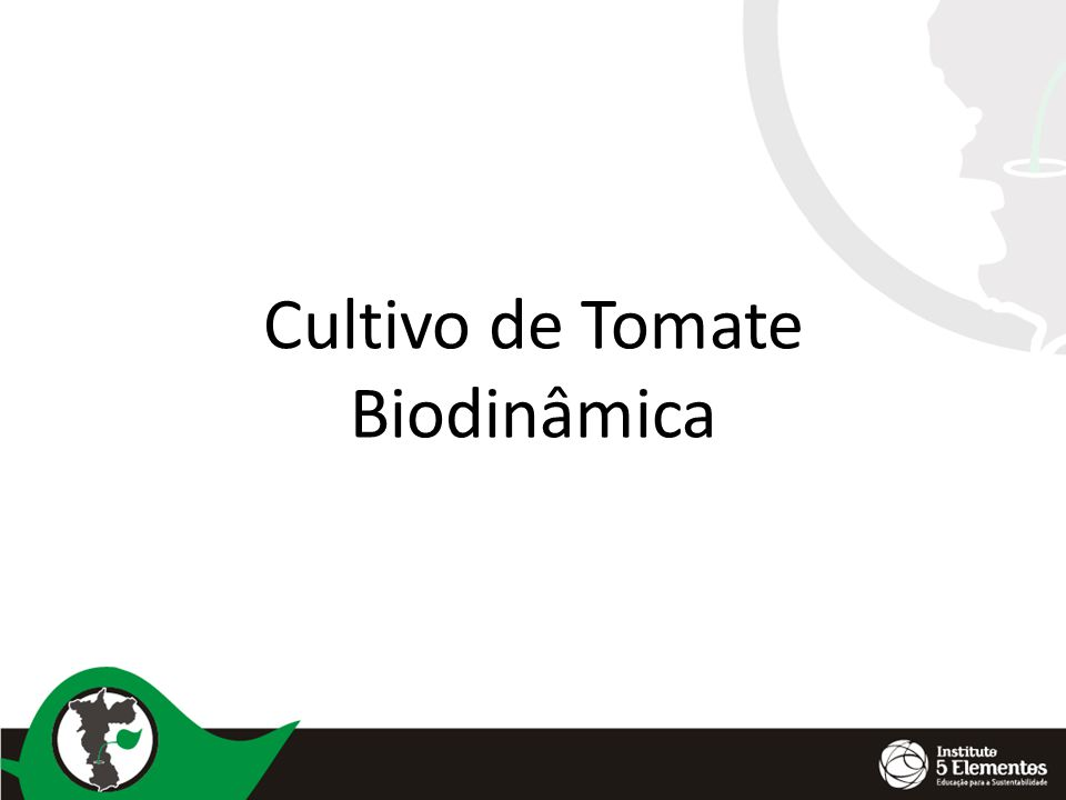 Cultivo de Tomate Biodinâmica