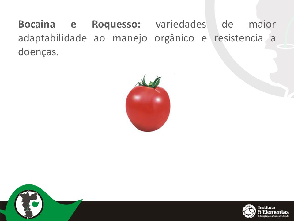 Bocaina e Roquesso: variedades de maior adaptabilidade ao manejo orgânico e resistencia a doenças.